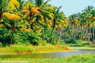 Backwaters, Coconut trees, Marari beach, Mararikulam, Kerala