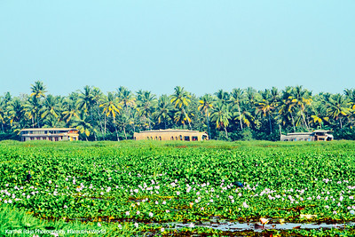 Houseboats, Lake Vembanad, bird sanctuary, Kumarakom, Kerala