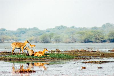 Wildlife, Marshlands, Keoladeo, Bharatpur National Park, Rajasthan, India