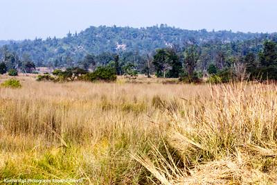 Rajaji National Park, Uttaranchal, India