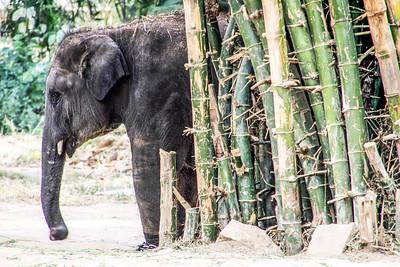 Elephants, Bannerghatta National Park, India
