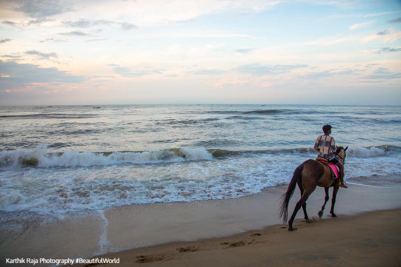 Horse, Pilgrimage Beach, Mahabalipuram, Tamil Nadu, India