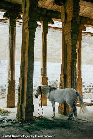 A real horse, Sri Ranganathaswamy Temple, Srirangam, Tiruchirapalli (Trichy)