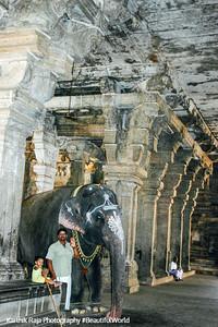 Elephant, Sri Jambukeshwarar Akilandeswari Temple, Thiruvanaikoil, Srirangam, Tiruchirapalli (Trichy)