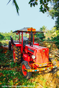 Tractor to take the sugarcane, Umayalpuram,Tamil Nadu