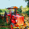 Tractor to take the sugarcane, Umayalpuram,Tamil Nadu