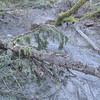 typical slope, mud and debris