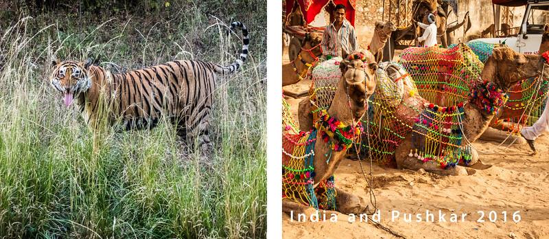 India 16 Book Cover-1000SM
