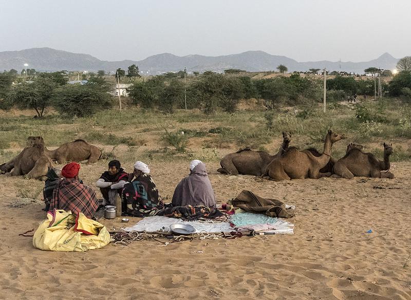 Camel Traders of Puskar