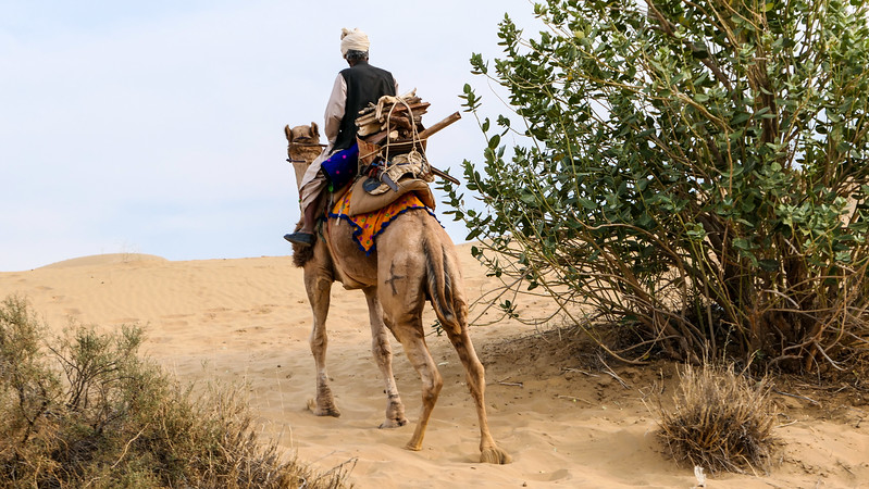 Jaisalmer Travel Guide: Visiting the Jewel of India's Thar