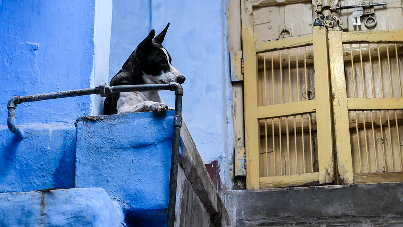 Visiting India's Blue City.