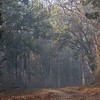Ethereal early morning light in Kanha.
