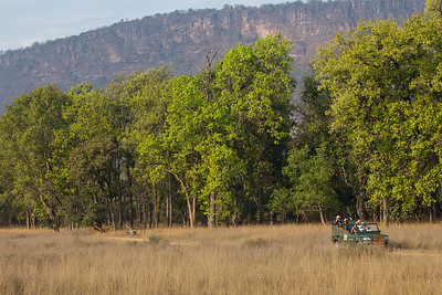 Game drive in Bandhavgarh NP