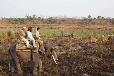 Elephant back safari in Kaziranga NP