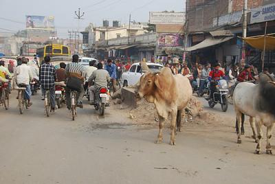 019 - Varanasi, street sights