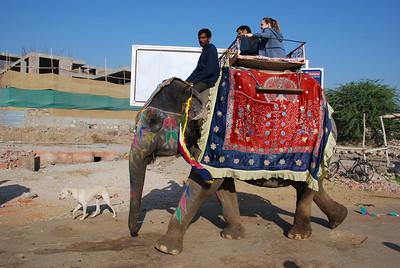 385 - A colorful elephant