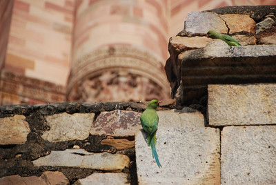 587 - Jama Masjid Minaret