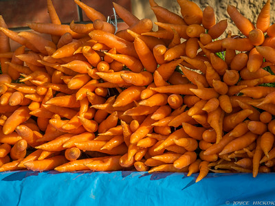 Hill Country Carrots, Ooty