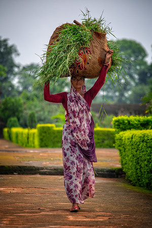Woman collecting grass clippings at the Cenotaphs, Orchha, India