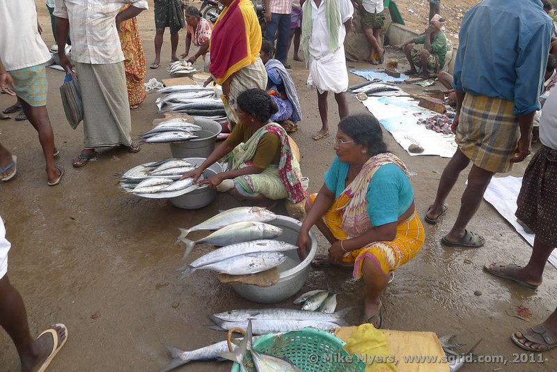 Individuals and businesses come to the fish market to buy the day's catch