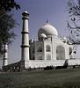 Leaves, Taj Mahal, Agra, India