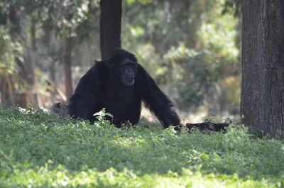 Nehru Zoological Park - Hyderabad Zoo, Hyderabad