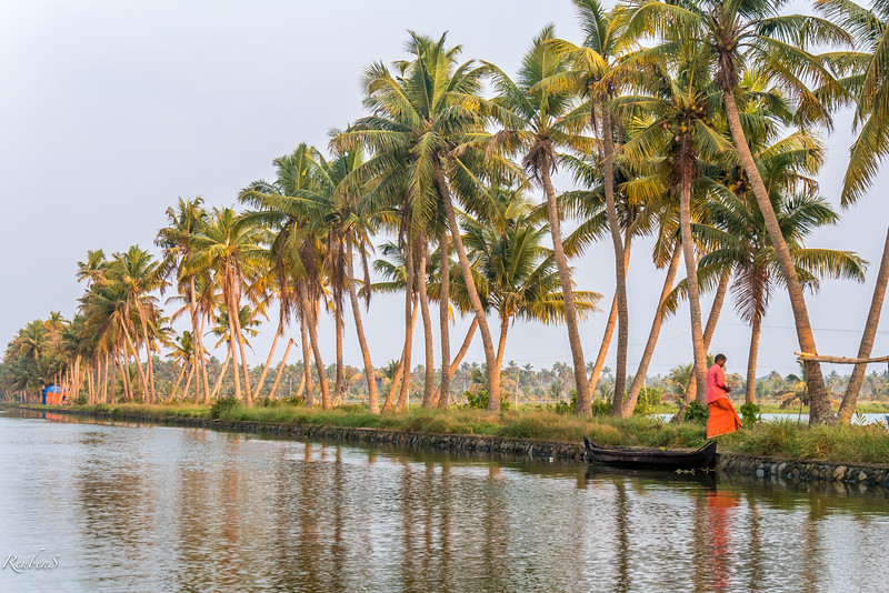 Palm trees along the canal, Kodamthuruth