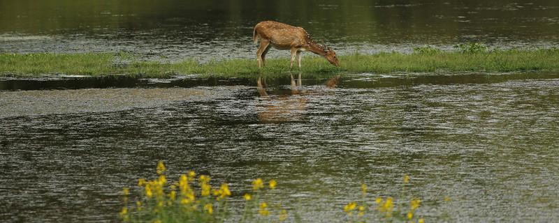 Bandipur Safari India 101023-24