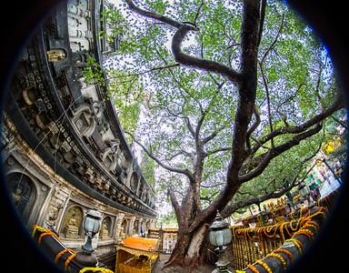 The Vajrashila, where the Buddha sat under the Bodhi Tree in Bodh Gaya