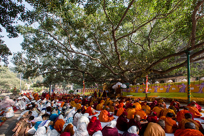 The Mahasangha reciting the words of the Blessed One under the Sacred Bodhi Tree during the 10th International Tipitaka chanting ceremony in Bodhgaya, Bihar, India.