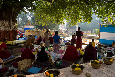 Tibetan monks and lay practitioners doing prostrations near the Sacred Bodhi Tree, Bodhgaya, Bihar, India.