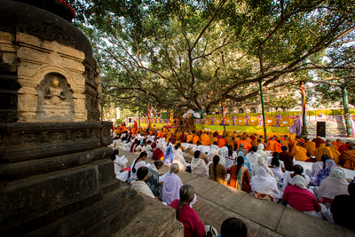 Monks and Nuns gather under the Sacred Bodhi Tree during the 10th International Tipitika chanting Ceremony in Bodhgaya, Bihar, India.