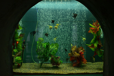 Aquarium in Rock Garden Chandigarh