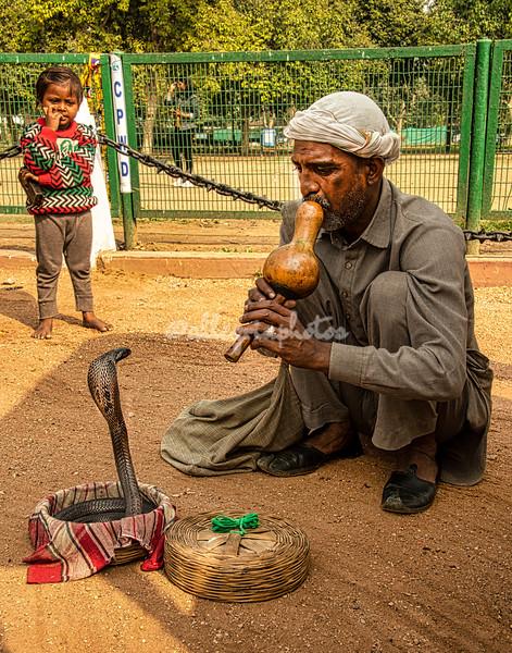 Snake charmer and spitting cobra, Delhi