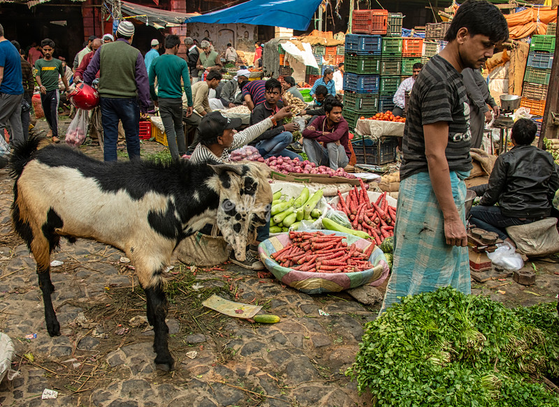 The goat in the market, Delhi