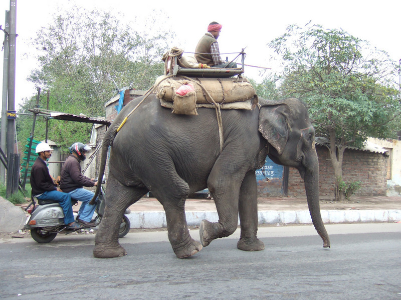 Barely out of Delhi, we see an elephant on the road.