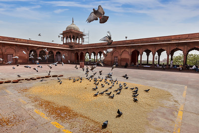 Pigeons in Jama Masjid mosque