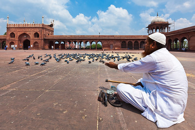 Muslim man feeding pigeons in India largest mosque Jama Masjid