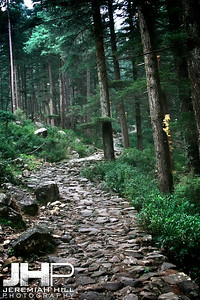 """Forest Path"", Dharamsala, Himichal Pradesh, India, 2007 Print IS2506-833"