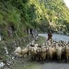 Дорога из Манди в Куллу