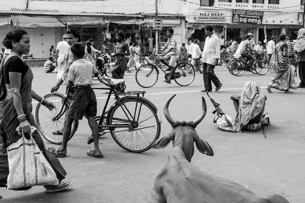 Sacred Cow, Puri, Orissa
