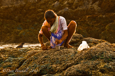 Digging for Clams at sunset in Patnem Beach, Goa, India