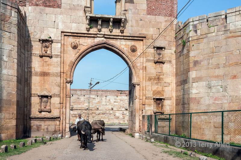 Man driving his oxen through the East Bhadra Gate<br /> <br /> Champaner-Pavagadh Archeological Park in Gujurat State, west of Vadodara (formerly Baroda), India. This area is a UNESCO World Heritage site with a blend of Hindu and Moslem ancient sites from pre-historic to the 16th century.