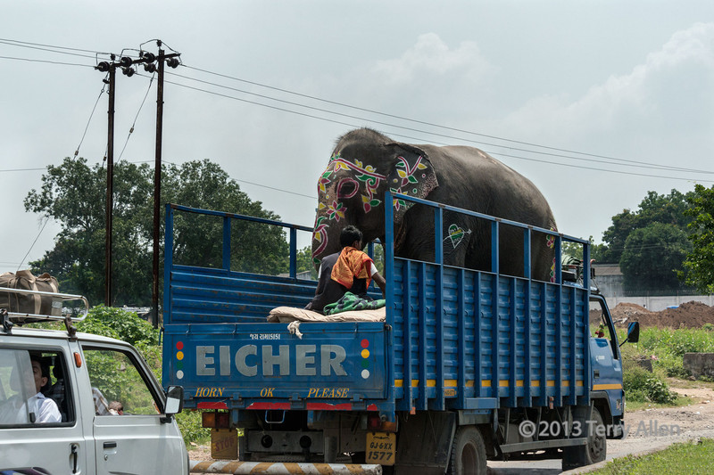 Gaily decorated elephant being transported to Ganesha festival, Vadodara, Gurarat State, India