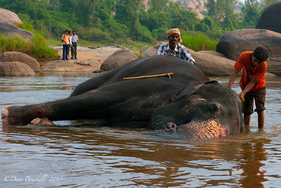 Elephant bathing at Hampi Ruins in Karnataka India