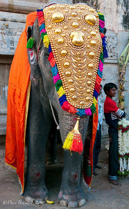 Lakshmi is decorated, the Festival elephant at the Hampi Ruins in Karnataka India