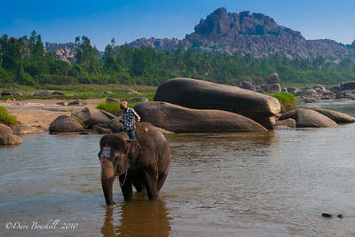 Lakshmi the temple elephant bathes at the Hampi Ruins in Karnataka India
