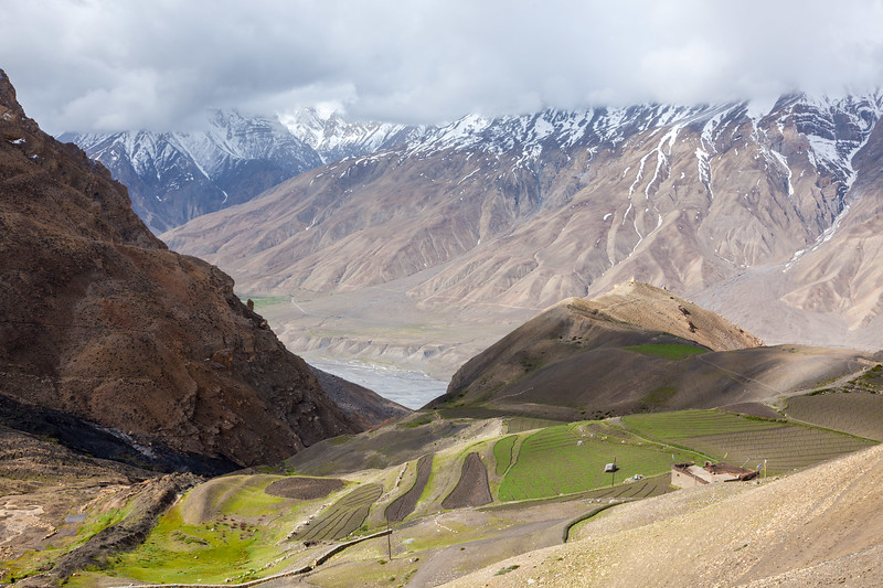 Fields in Spiti Valley