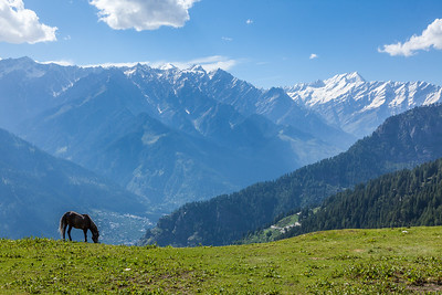 Horse in mountains. Himachal Pradesh, India