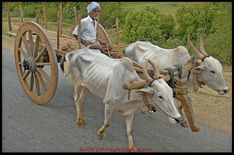 near Kozhikode,India